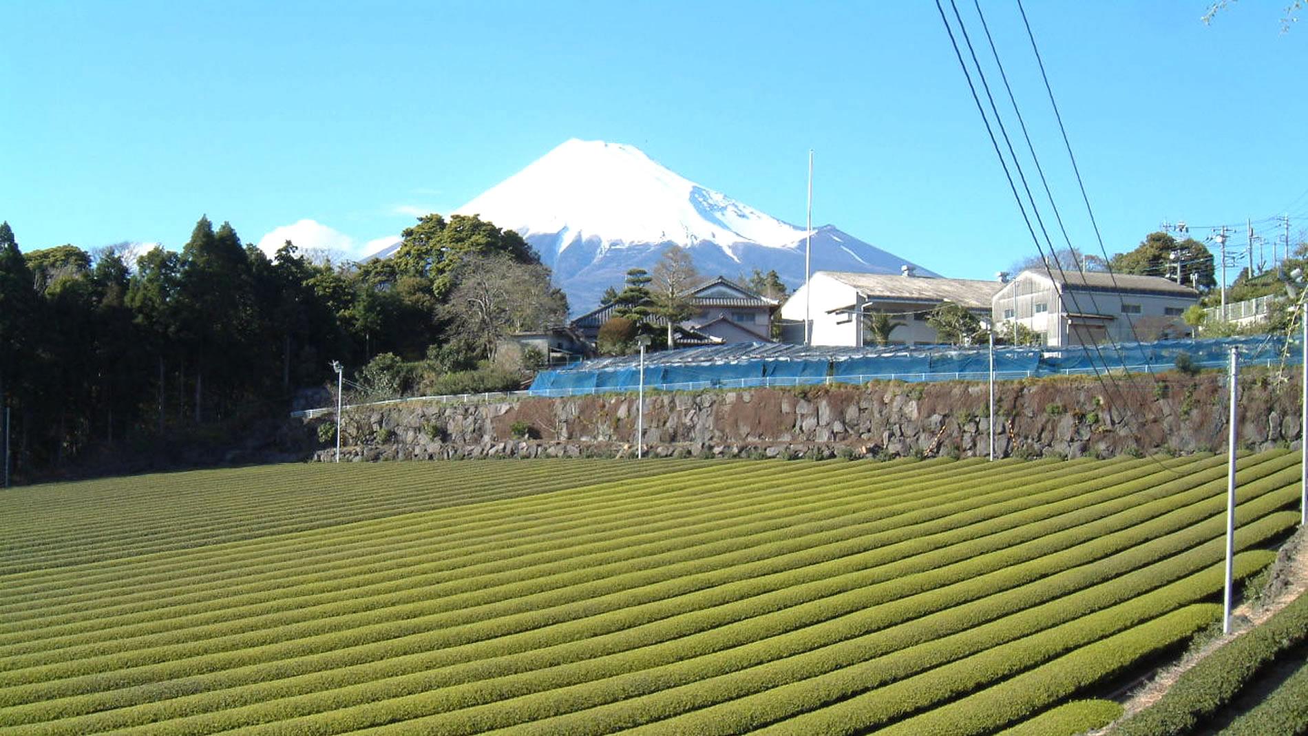 秋山園 ~最高のお茶を求めて~