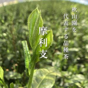 秋山園を代表する品種茶:摩利支